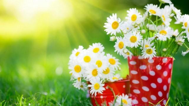 Как выбрать училище (пту), центр обучения флористов и какой разряд будет присвоен.