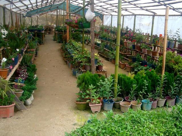 Где найти курсы и мастер-классы (мк), семинары и тренинги флористов на дому или индивидуально.
